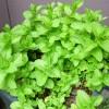 観葉植物管理法(夏)