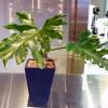 観葉植物の管理法(冬)