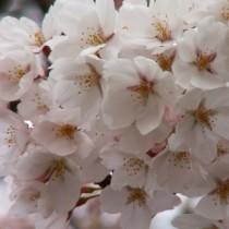 河北門(春)